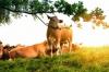 Bienestar Animal: Legislación y Práctica en un Matadero.